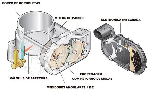 Fig. 09 – Constituição de um Corpo de Borboleta