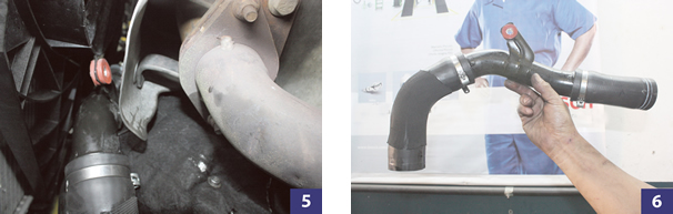 Foto 5 e 6